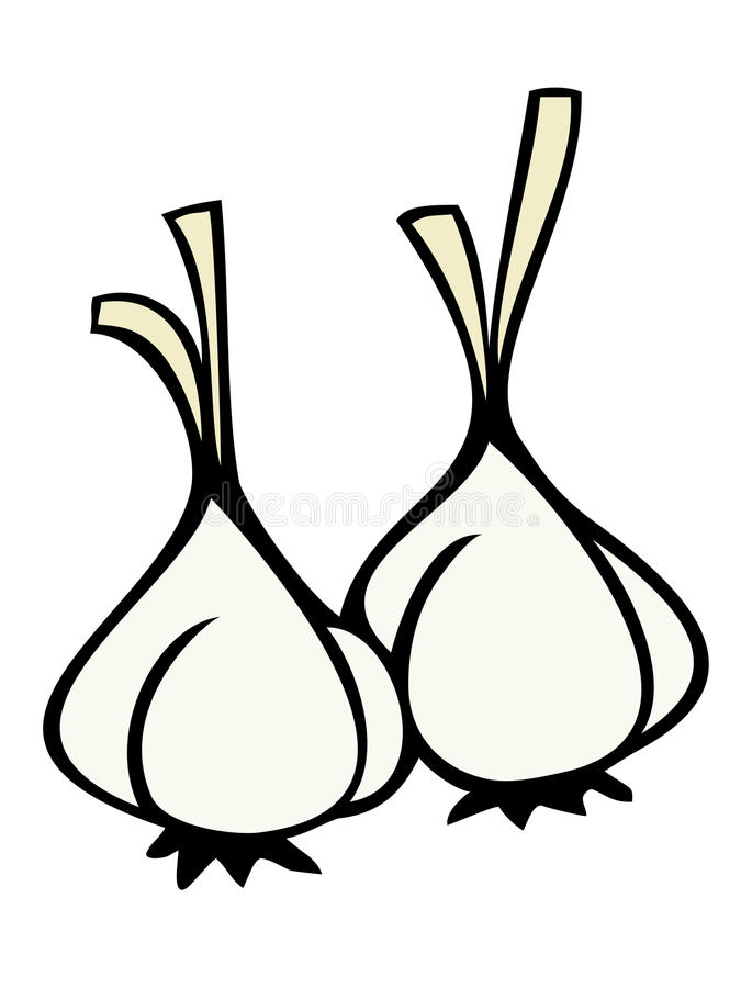 Cloves of garlic. Illustration of a couple of cloves of garlic stock illustration