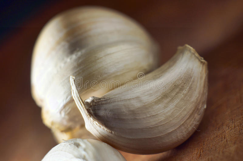Download Cloves of Garlic stock image. Image of anti, herb, spice - 39511237