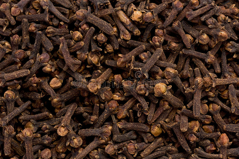 Cloves (Syzgium aromaticum) stock photography