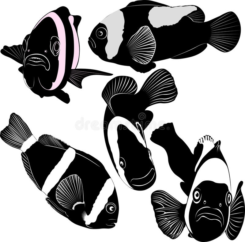 Clown Fish Stock Vector