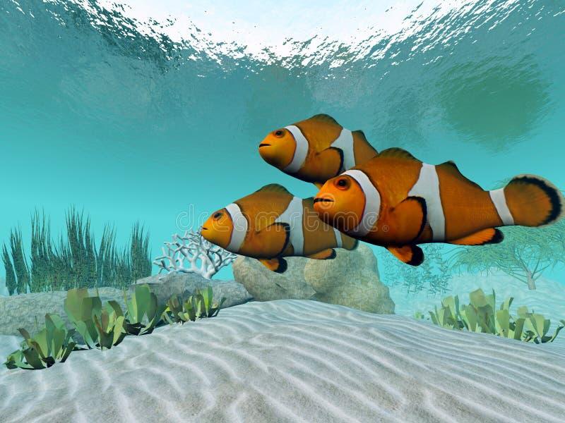 Download Clownfish stock illustration. Illustration of beautiful - 25055174