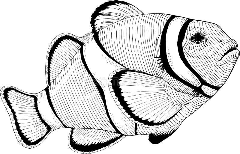 Clownfish ilustracja wektor