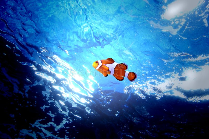 clownfish arkivfoton