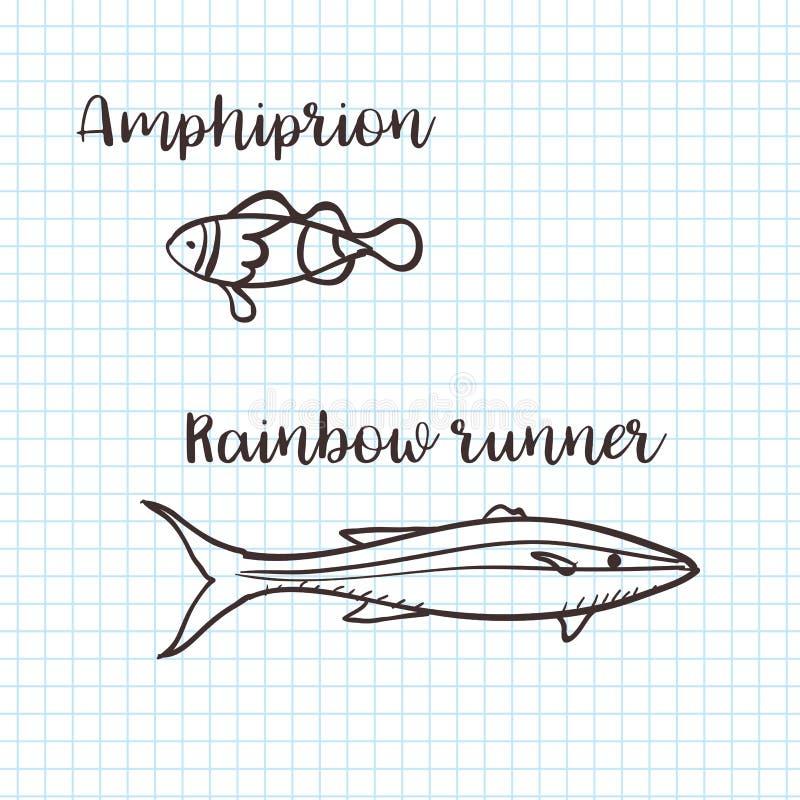 Clownfish de Clownfish Anemonefish, de Ocellaris, ocellaris del Amphiprion y corredor de arco iris, garabato dibujado mano, bosqu ilustración del vector