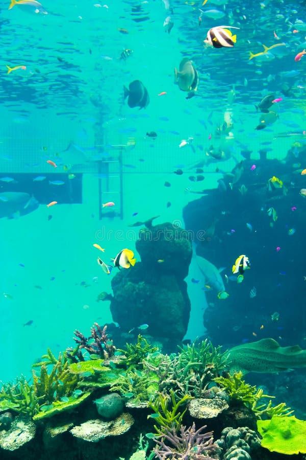 Clownfish przy akwarium fotografia royalty free