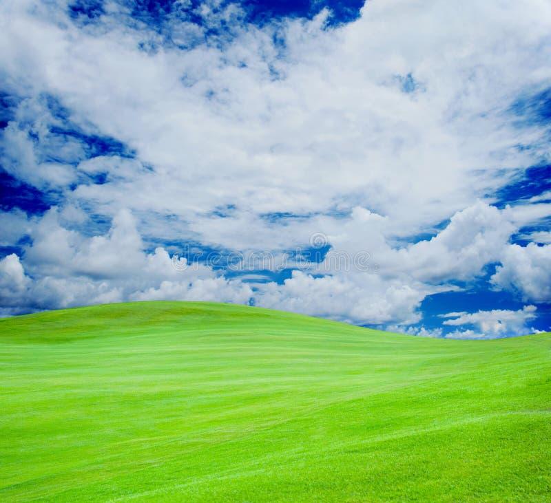 Club de golf Champ et boule verts dans l'herbe image libre de droits