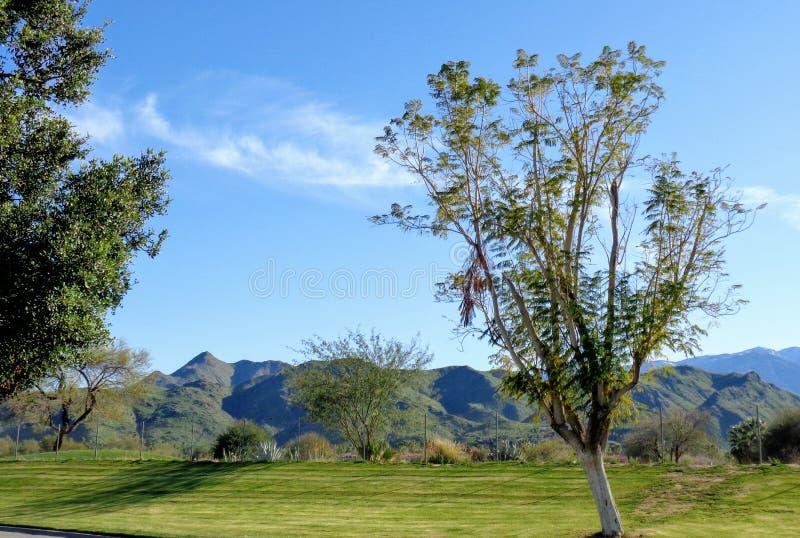 Club di golf del Palm Springs fotografia stock