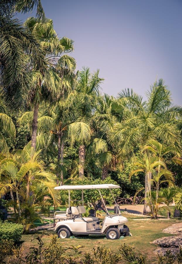 Clubkar onder palmen stock afbeelding