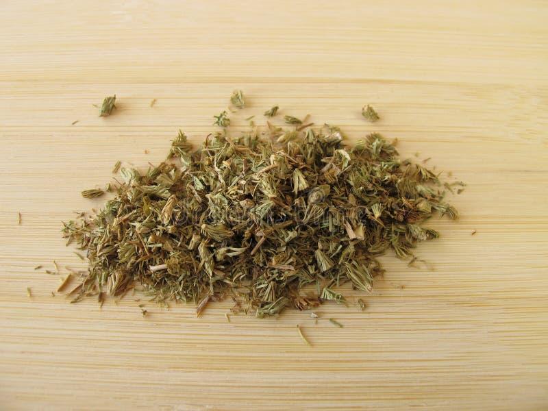 Clubmoss, herba de Lycopodii fotografia de stock