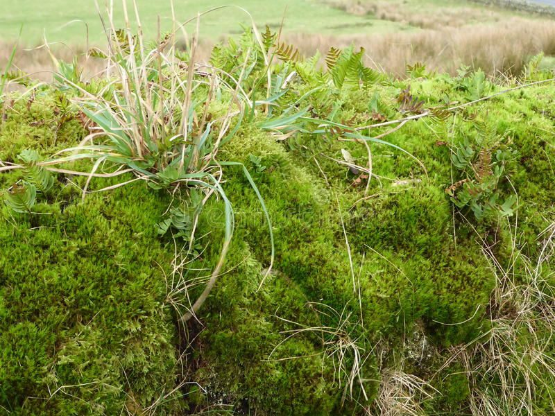 Clump of moss and Grasses stock photos