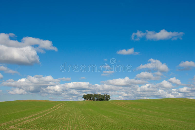 Download Clump Of Tree Stock Photos - Image: 27147763