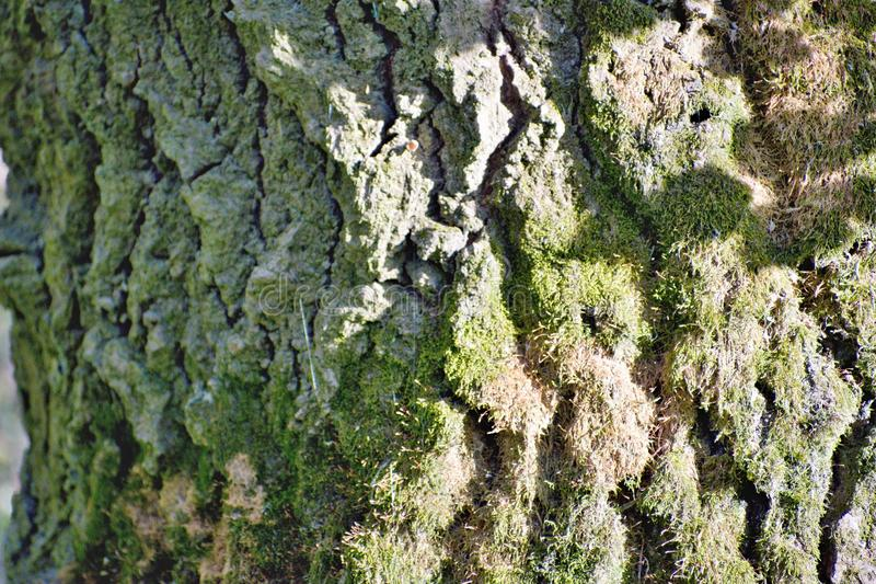 Clumps of moss. On the ground and base of trees. Location: River Váh royalty free stock photos