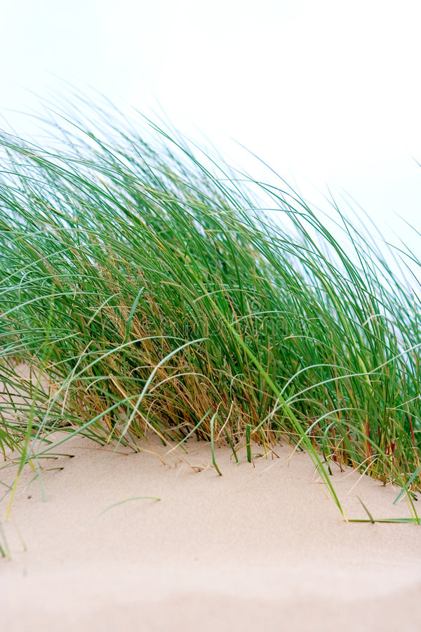 Free Clumps Of Sea Grass Royalty Free Stock Image - 2600696