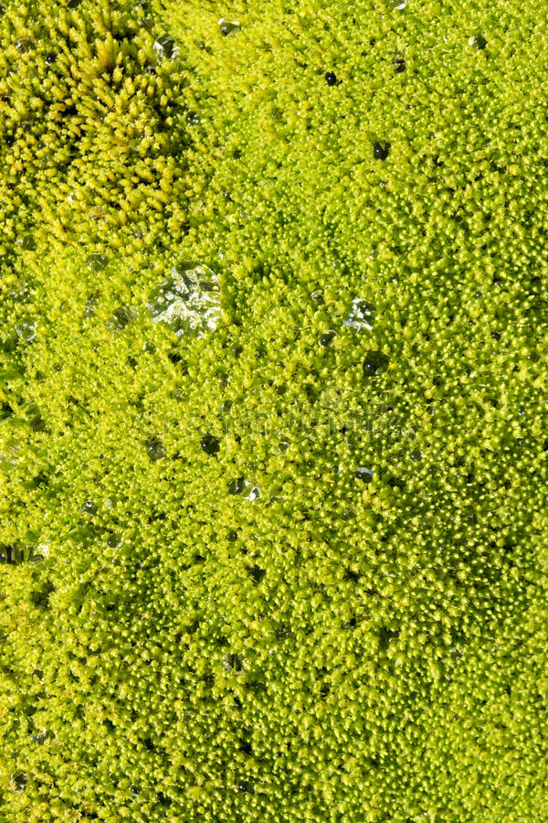 Cluseup moss in Norway royalty free stock photography