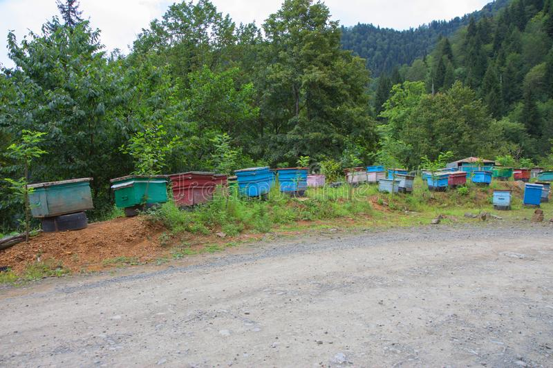 A cluster of beehives sit among trees. The wooden colorful boxes are painted bright colors. Wooden multi-colored beehives for bees. Bee hive in the summer stock photography