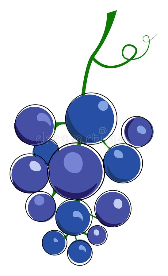 Cluster of blue grape with tendril illustration vector royalty free illustration