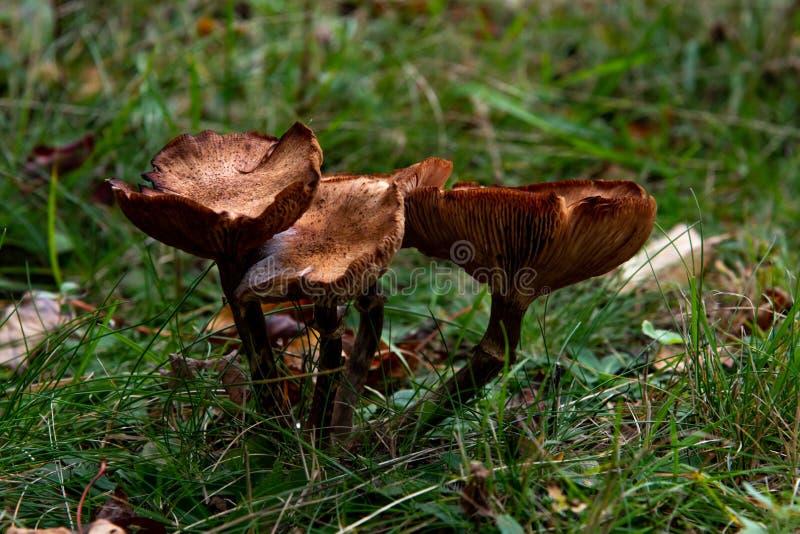 Cluster di funghi in una foresta fotografie stock