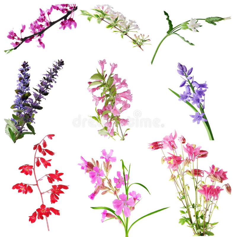 Cluster Flower stock photos