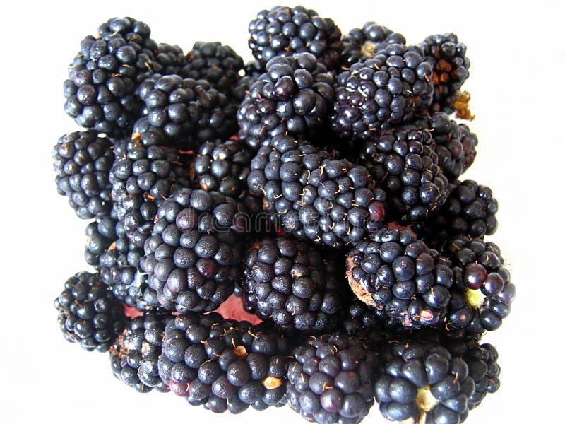 Cluster of fresh blackberries stock image