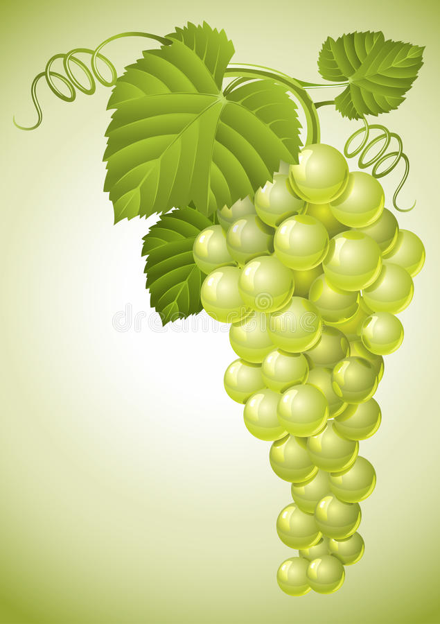 Cluster Of Grape With Green Leaves Stock Photos