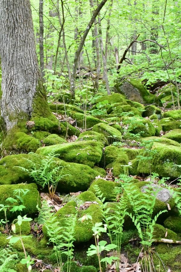 Cluster Of Mossy Rocks stock images