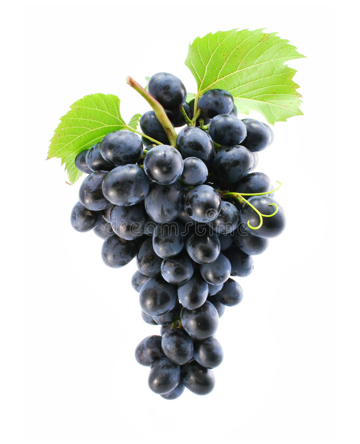 Free Cluster Of Blue Grape Isolated Stock Photography - 6690612