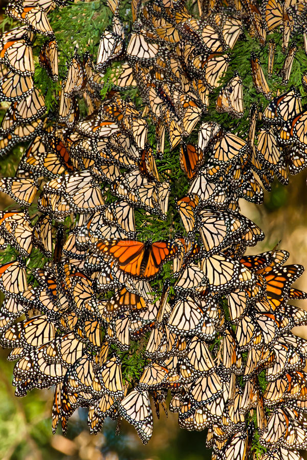 Free Cluster Of Butterflies Royalty Free Stock Photos - 22667918