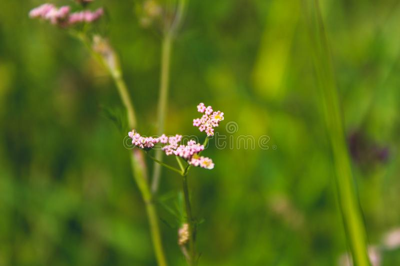 Cluster Pink Petaled Flowers in Bloom at Daytime stock photography