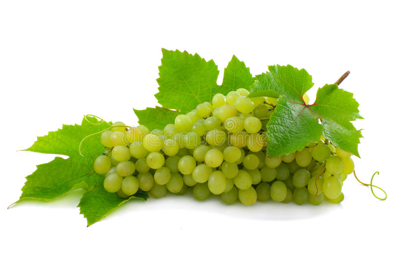 Cluster of ripe, green grapes. royalty free stock images
