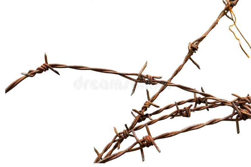 Cluster of rusty barbed wire fence on white background stock images