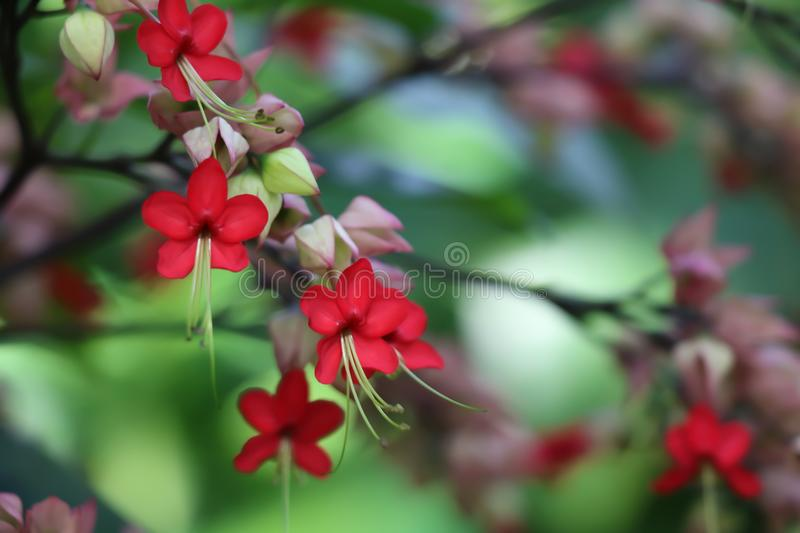 Cluster of small vibrant red flowers stock photos