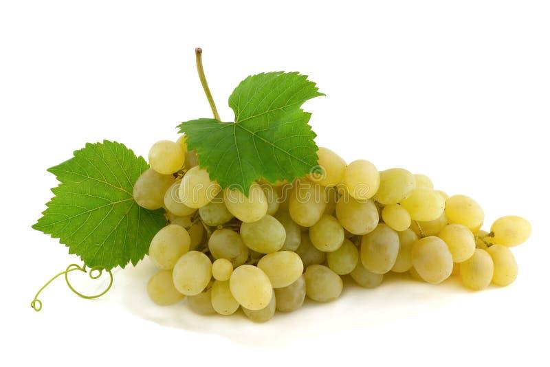 Cluster van rijpe, groene druiven. royalty-vrije stock foto's