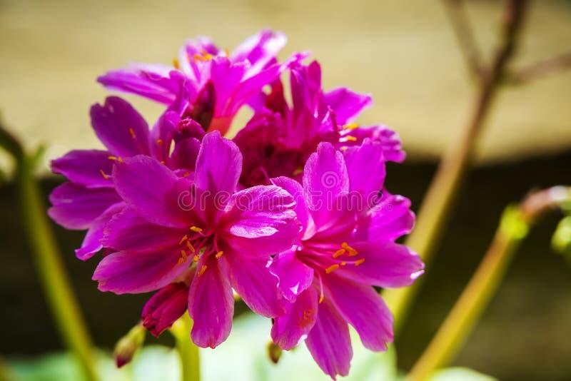 Cluster van roze bloemen royalty-vrije stock afbeelding