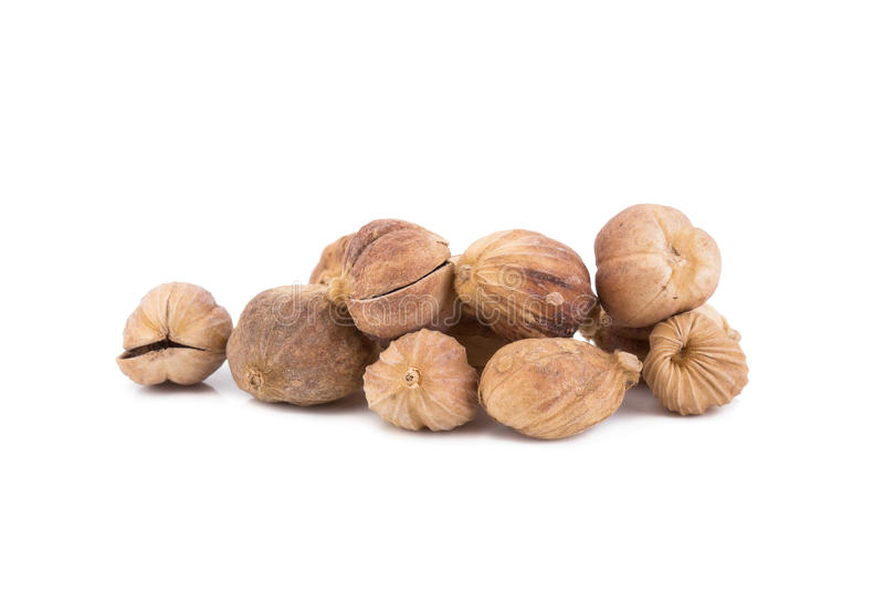 Clustered Cardamom, Camphor Seed. Dried Herbs,Amomum krervanh Pierre,Siam Cardamom, Best Cardamom, Clustered Cardamom, Camphor Seed,Zingiberaceae royalty free stock image