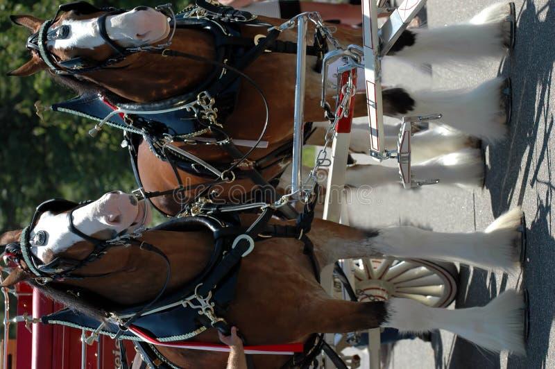 Clydesdale Pferde lizenzfreies stockbild