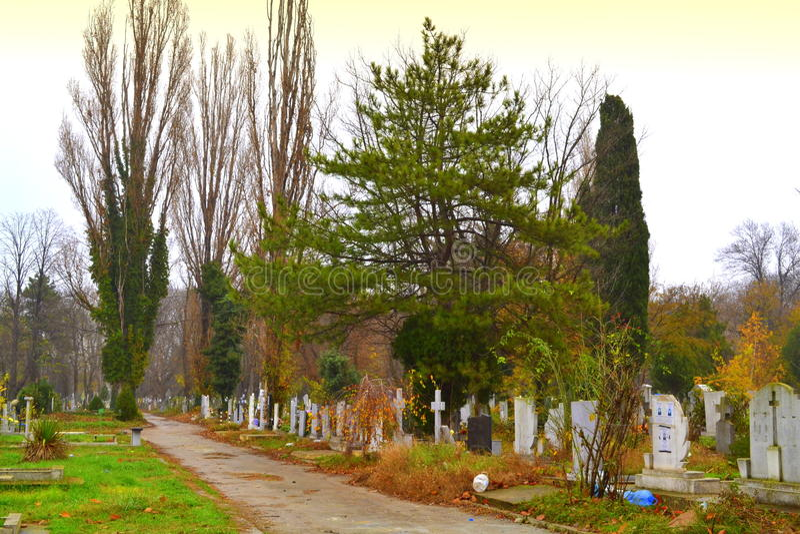 Cmentarz aleja obraz stock