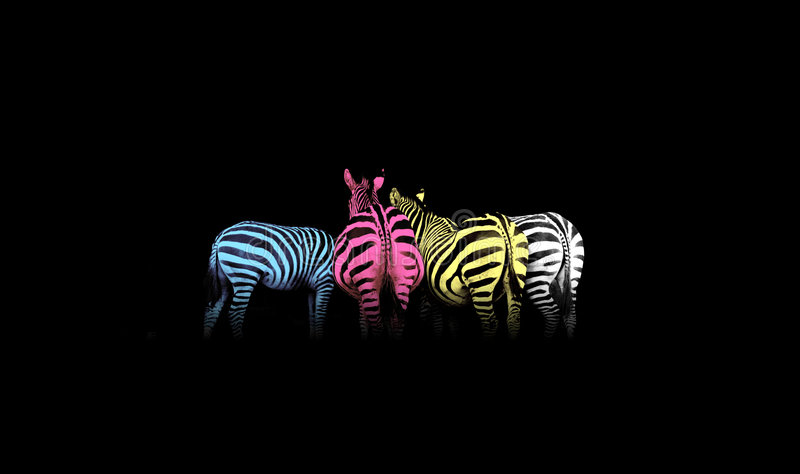 CMYK Colored Zebras stock images