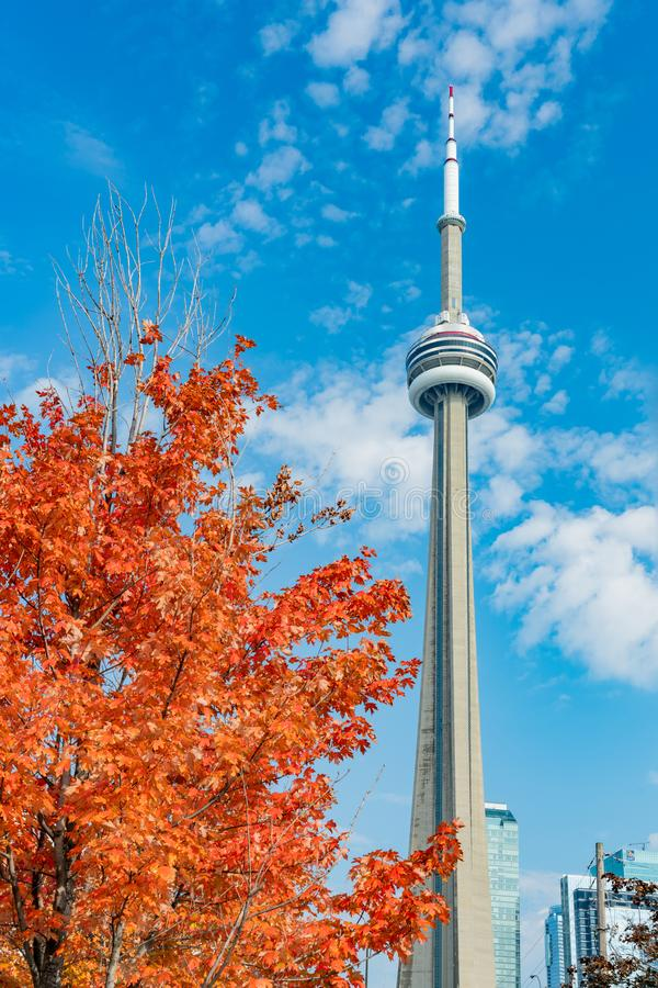 CN Tower with lovely red maple leaves. Looking up the CN Tower with lovely red maple leaves at Toronto, Canada royalty free stock photo