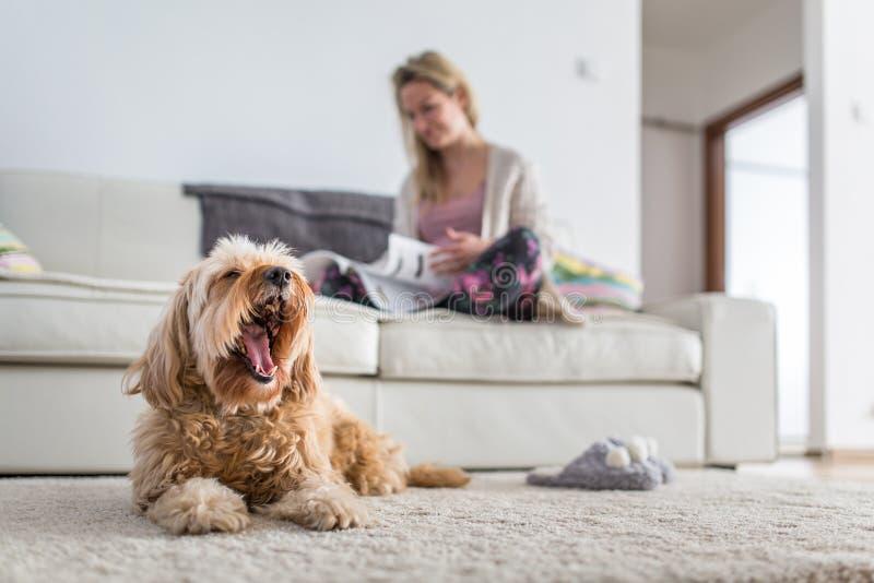 Собака в современной, яркой живущей комнате на ковре стоковое изображение