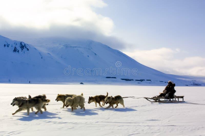 Собака sledding, переход в Chukotka, езды мальчика в тележке стоковое фото