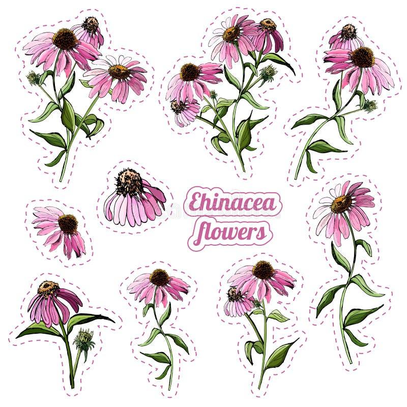 Собрание стикеров букетов розового цветка эхинацеи стоковые фото