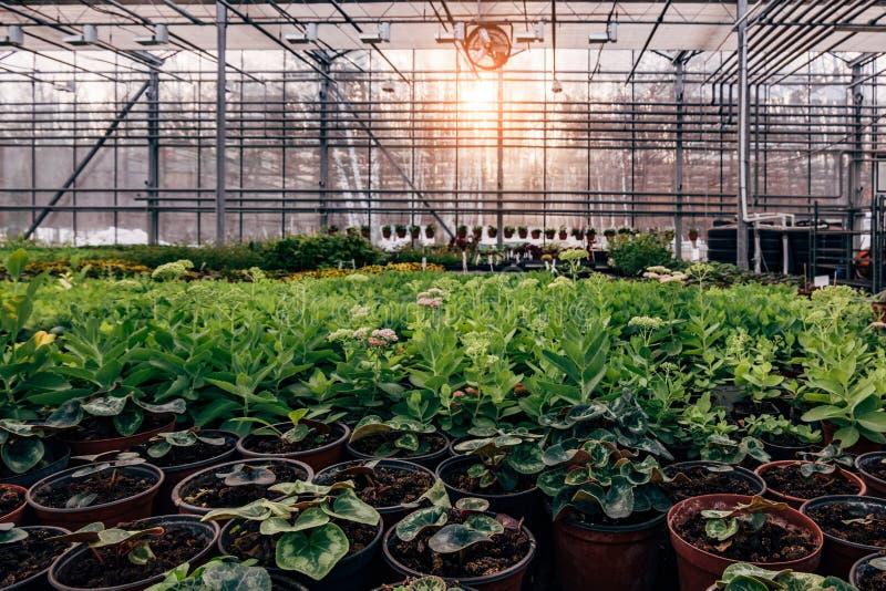Современный hydroponic парник с системой контроля климата для культивирования цветков и орнаментальных заводов для садовничать стоковые фото