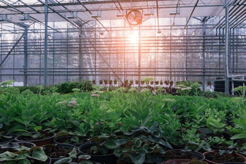 Современный hydroponic парник с системой контроля климата для культивирования цветков и орнаментальных заводов для садовничать стоковые изображения rf