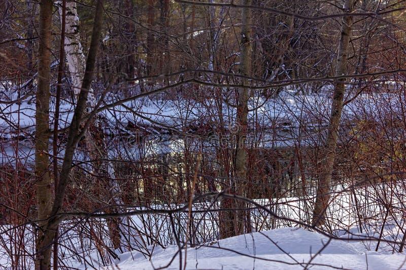 солнечный день на снежном фото двойн-iso леса зимы стоковое фото