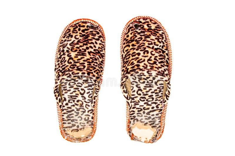 Сорванные тапочки a Печать леопарда белый изолят стоковые изображения rf