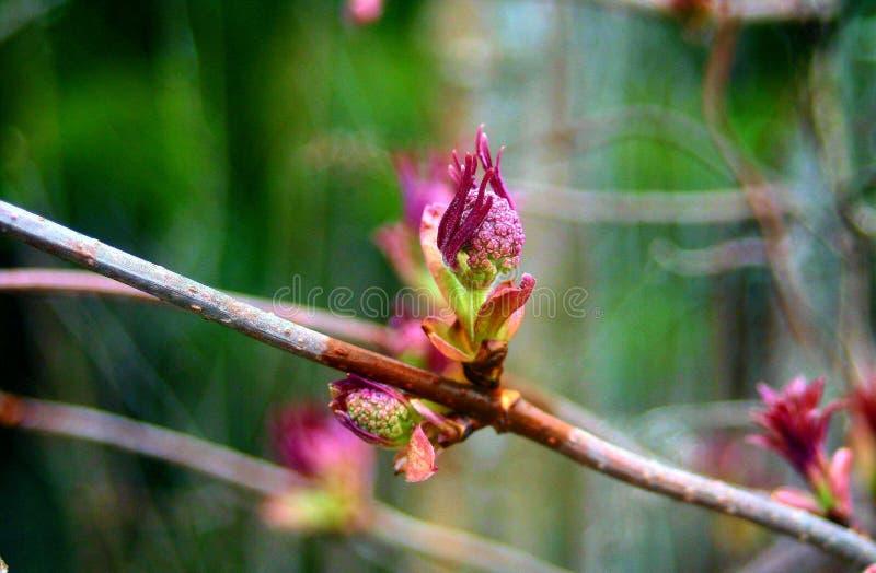 Coś różowy narastający up na drzewie obrazy stock