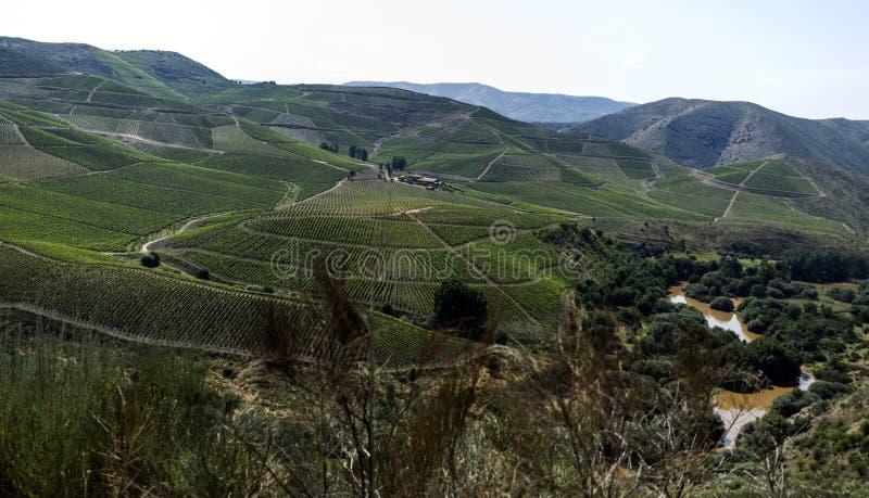 Coa Rzecznego †'widok dolina zdjęcie stock