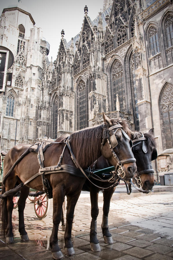 Free Coach In Vienna Royalty Free Stock Photos - 12430078
