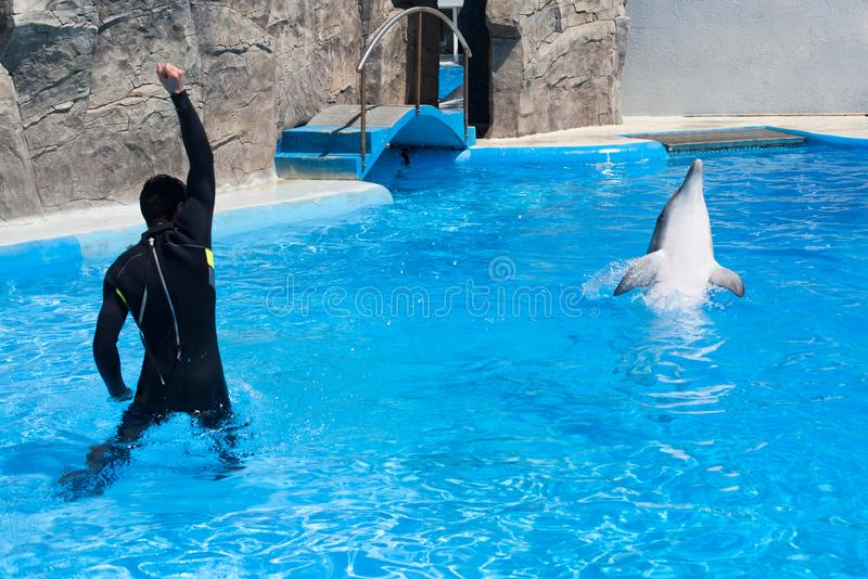 Coach trainer man in black diving suit and dolphin in water pool in dolphinarium with blue water, coach teaches dolphin to jump stock photo