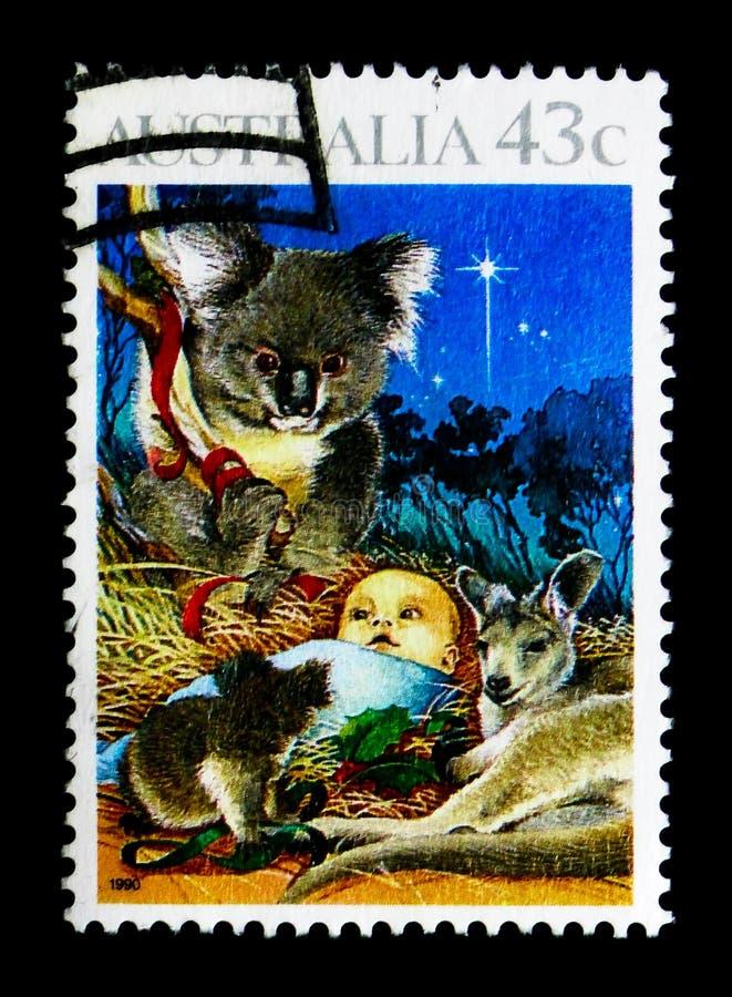 Coala (cinereus), serie 1990 do Phascolarctos do Natal, cerca de 1990 fotografia de stock
